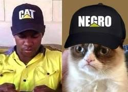 Enlace a El Gato más racista del mundo