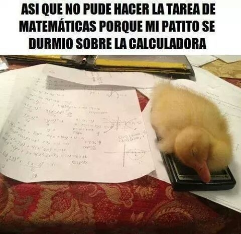 Meme_otros - Los patos como siempre impidiéndonos terminar nuestros deberes
