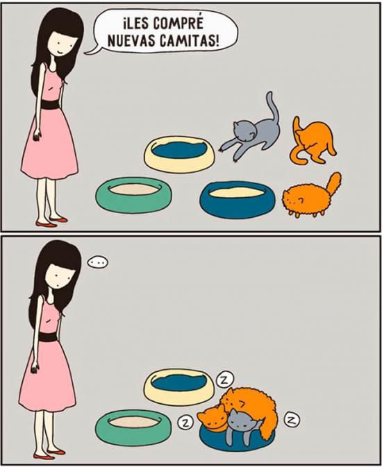 Otros - Los gatos nunca seguirán lo establecido