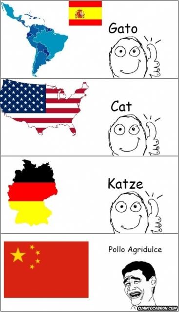 Yao - Traducciones de la palabra Gato