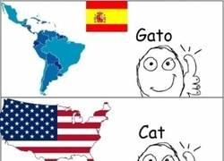 Enlace a Traducciones de la palabra Gato