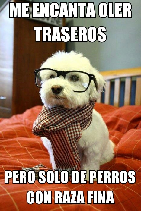 Meme_otros - Un perrito con mucha clase
