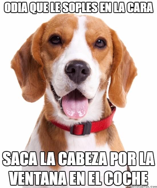 Meme_otros - Perros y su lógica