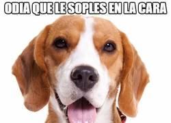 Enlace a Perros y su lógica