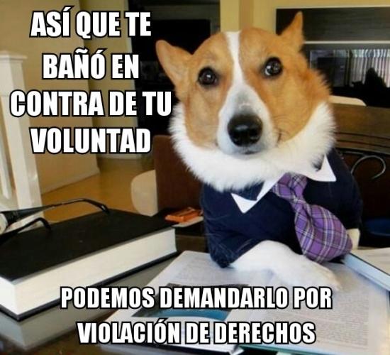 Meme_otros - El perro abogado