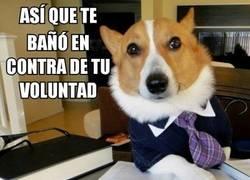 Enlace a El perro abogado