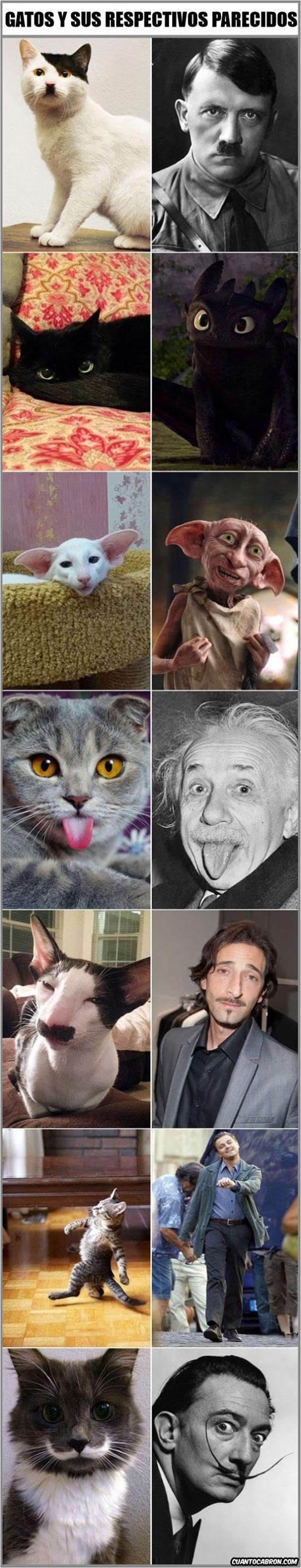 Otros - Gatos vs celebridades