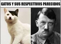 Enlace a Gatos vs celebridades