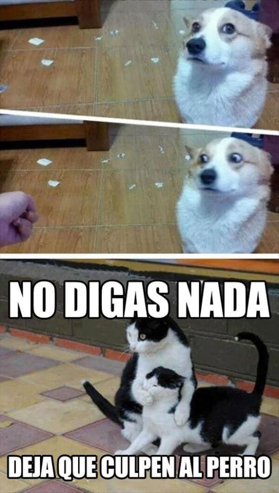 Meme_otros - Cuando los gatos te traicionan