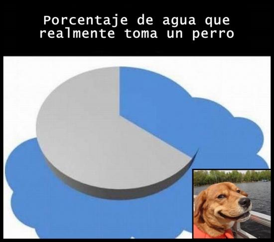 Meme_otros - Quienes tienen perro sabe que es así
