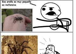 Enlace a Nunca confíes en el tamaño de una araña