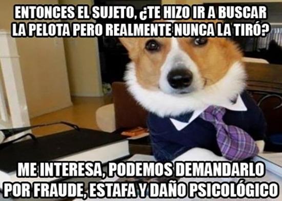 Meme_otros - Si los perron fueran como nosotros...