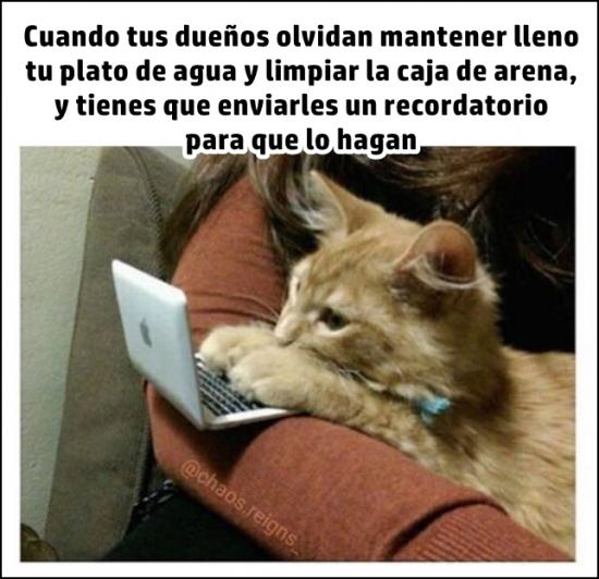 Meme_otros - Ultimátum gatuno