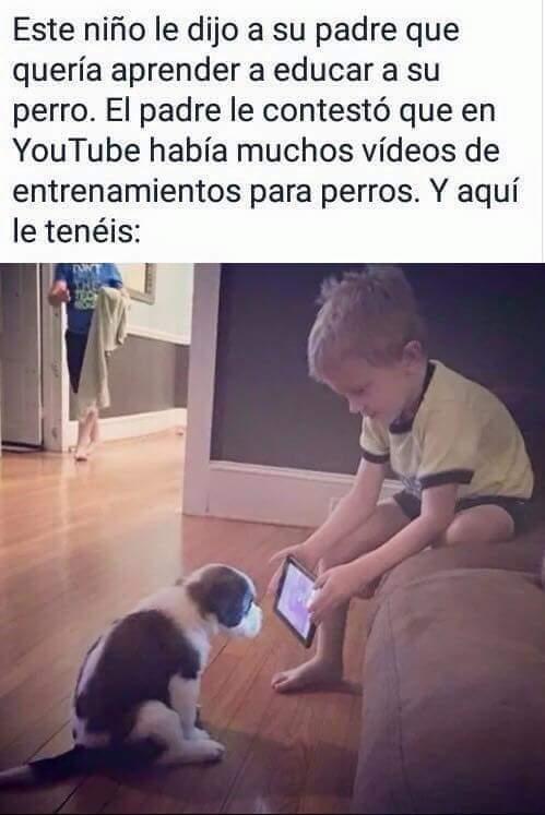 Meme_otros - Educando a su mascota