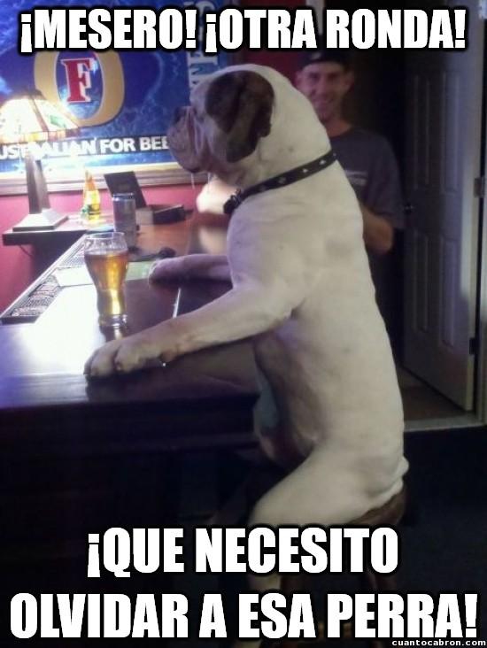 Meme_otros - Hasta los perros beben para olvidarse de los problemas
