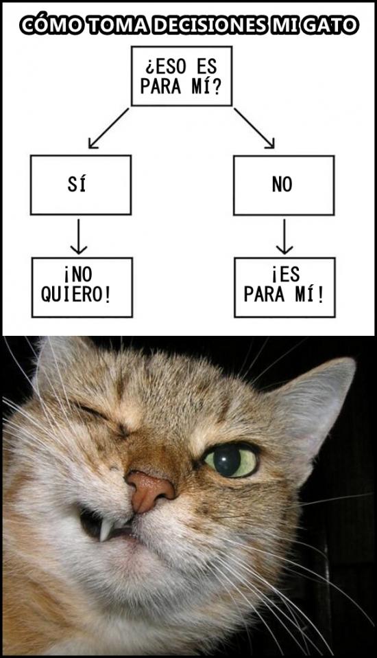 Meme_otros - Y es que lo hacen a propósito los gatos