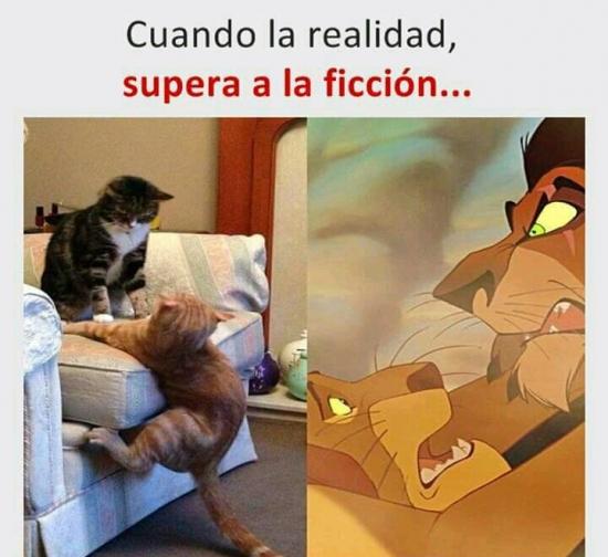 Meme_otros - Simplemente felinos...