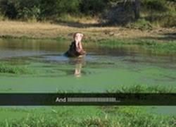 Enlace a Los hipopótamos también tienen sentimientos