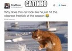 Enlace a Este gato es el mejor del año, sin duda