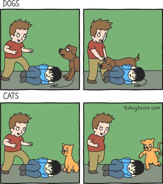 Meme_otros - Y es por eso que el perro es el mejor amigo del hombre