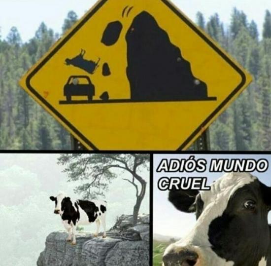 A_nadie_le_importa - La vaca suicida