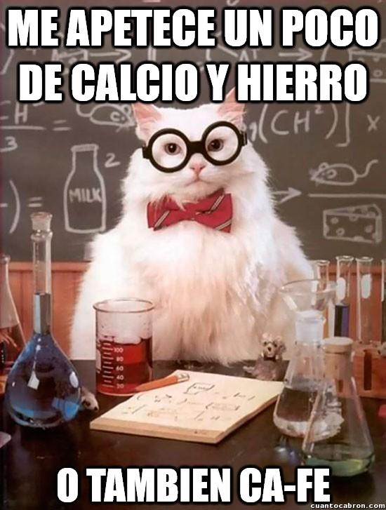 Gato_quimico - El madrugador