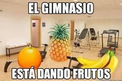 Enlace a Los frutos del gimnasio