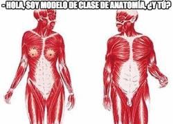 Enlace a Hola, soy modelo de clase de anatomía