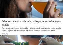 Enlace a Beber cerveza sería más saludable que tomar leche, según un estudio de Harvard