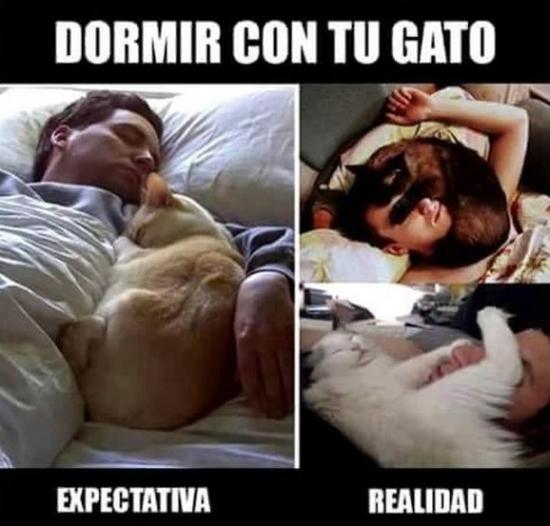 Meme_otros - Dormir con tu gato no puede salir tan bien como te imaginas