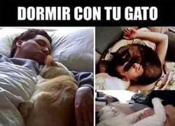 Enlace a Dormir con tu gato no puede salir tan bien como te imaginas