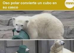Enlace a El oso polar más guerrero