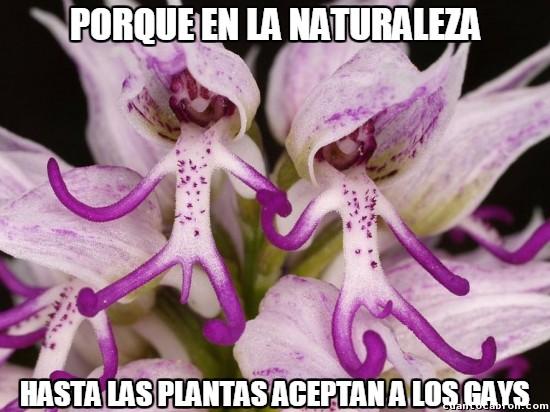 Meme_otros - Las plantas no son homófobas