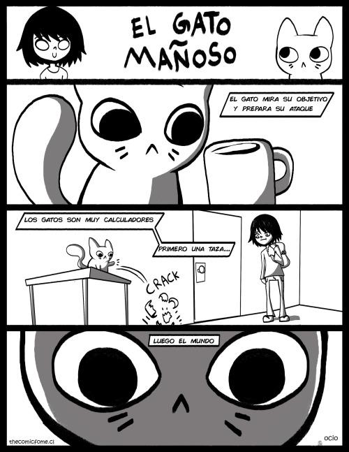 Otros - La astucia de los gatos