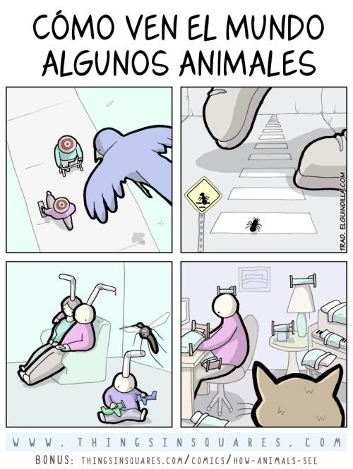 Otros - Así ven el mundo algunos animales