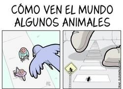 Enlace a Así ven el mundo algunos animales