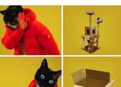 Enlace a El regalo que desea cualquier gato