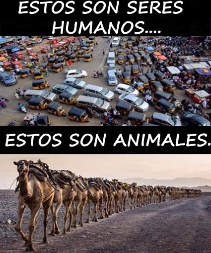 Meme_otros - Los animales nos llevan años de venatja