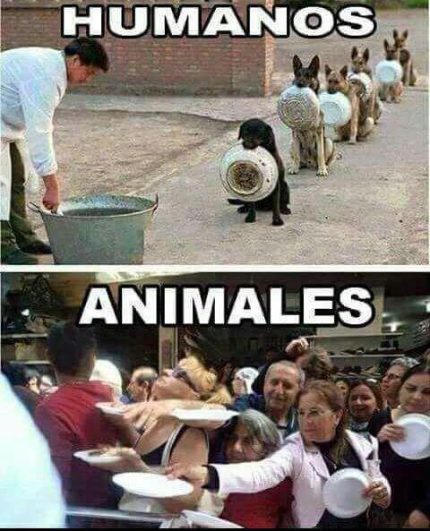 Meme_otros - Diferencias entre humanos y perros