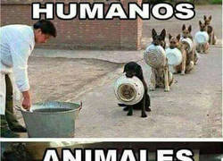 Enlace a Diferencias entre humanos y perros