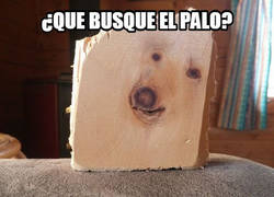 Enlace a Pareidolia canina
