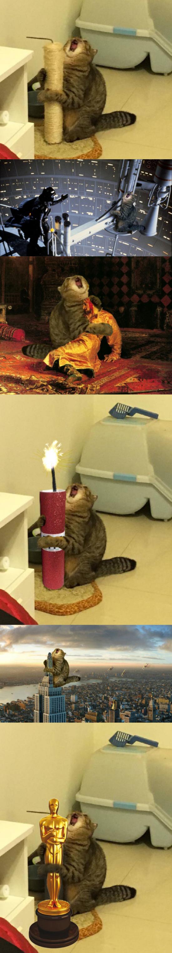 Meme_otros - El gato y su rascador que llenaron internet de memes