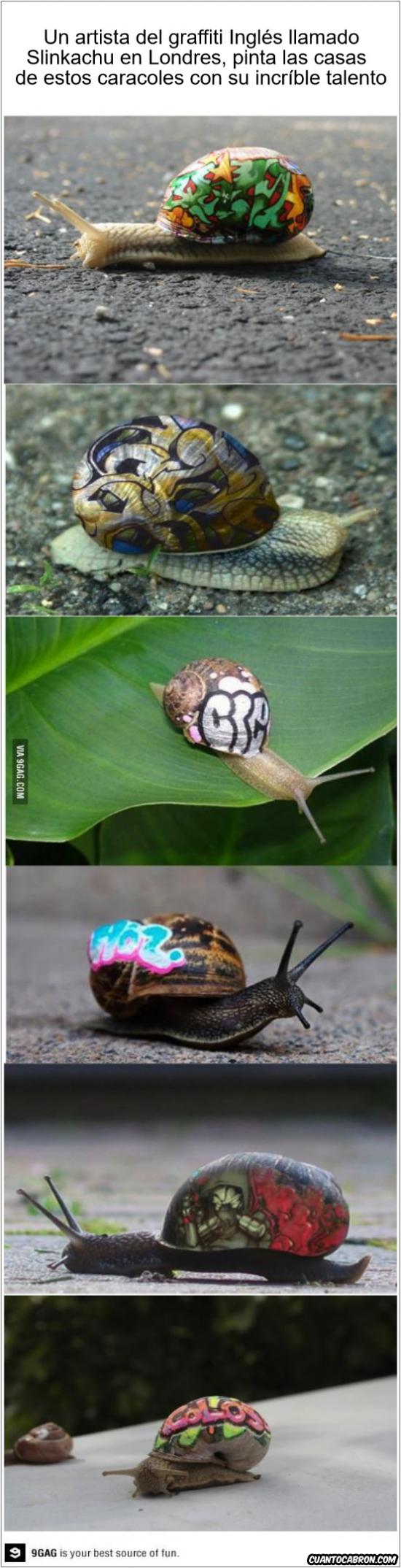 Otros - Fascinante habilidad con caracoles