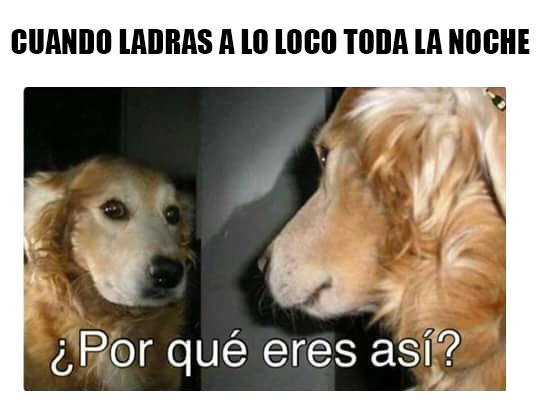 Meme_otros - Lógica canina