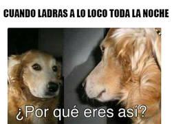 Enlace a Lógica canina