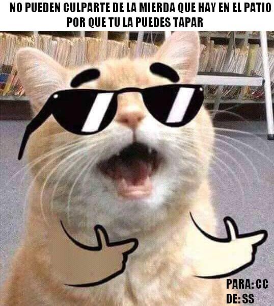 Meme_otros - ¿Cómo culparías un gato?