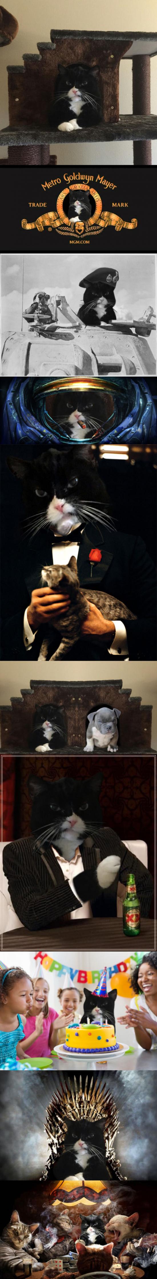 Meme_otros - Este gato llena internet de montajes después de ser pillado enfadado