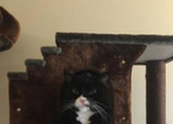 Enlace a Este gato llena internet de montajes después de ser pillado enfadado
