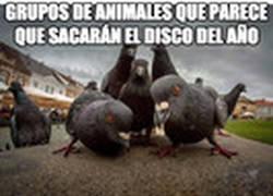 Enlace a Estos animales parecen toda una estrella de la música