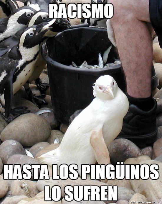 Meme_otros - Racismo pingüinesco